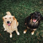 Dog Parks in Reading