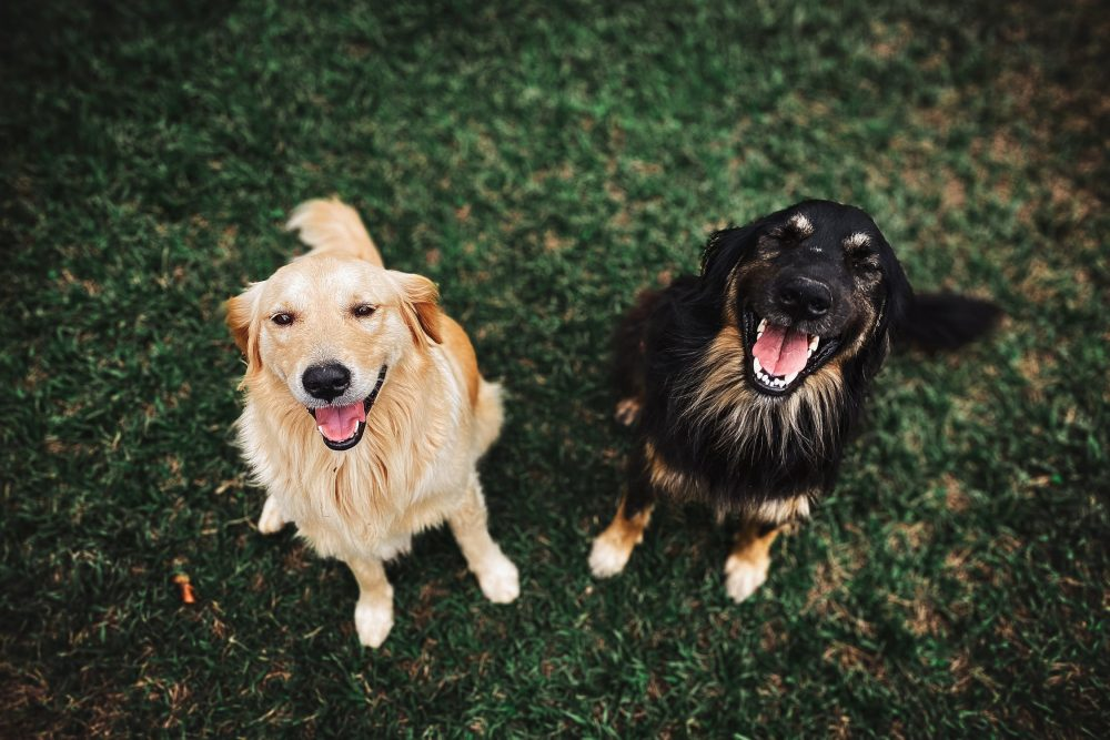 FOR THE FUR BUDDIES: 3 Delightful Dog Parks in Reading UK