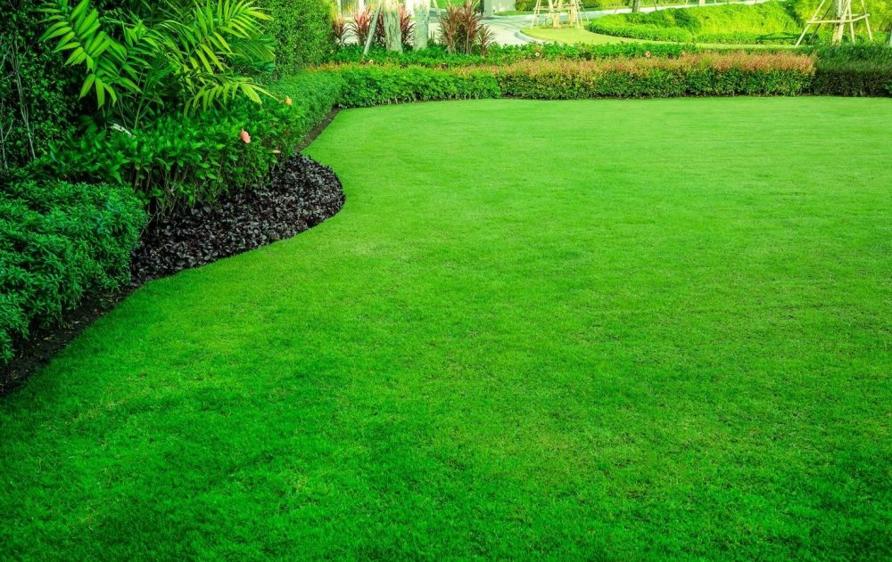 How to Care for New Lawn Grass