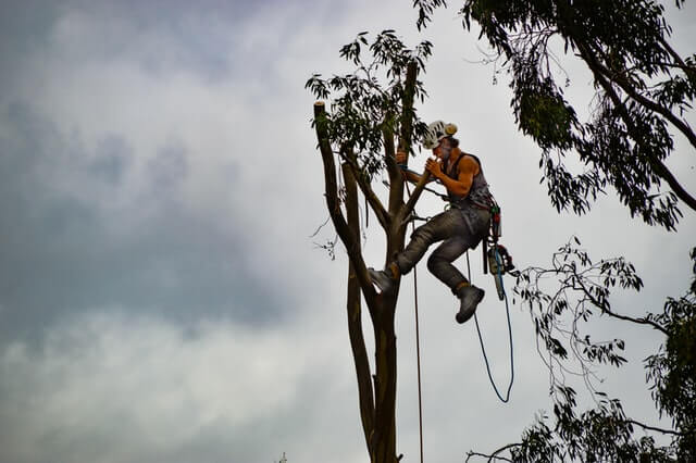 Are you a Tree-lover? 7 Things to Consider if you want to Become an Arborist